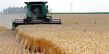 گندم گلستان تا پایان تیرماه نباید از استان خارج شود/ 5 تیر اوج خرید تضمینی گندم و کلزا در 162 نقطه گلستان
