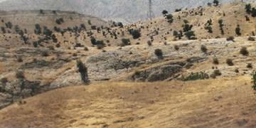 10 هکتار از مراتع استان البرز طعمه آتش شد