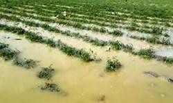 نارضایتی کشاورزان گلستانی از روند پرداخت تسهیلات برای جبران خسارات سیل