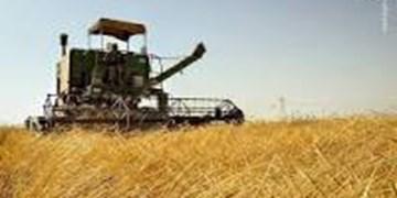 افزایش 6 درصدی کشت گندم در مزارع کشاورزی استان قزوین