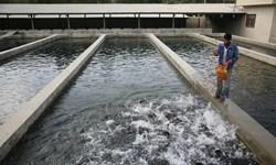 چهارمحال و بختیاری قطب تولید ماهیان سردابی  کشور