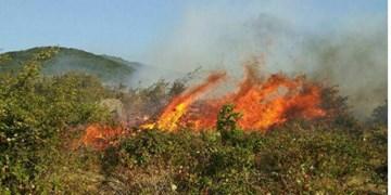 تلاش برای کاهش آتش سوزی مراتع منجر به کاهش واردات غذای دام میشود