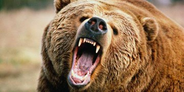خرس یک جوان ایذهای را مجروح کرد