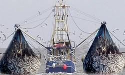 توقیف 19 شناور  در خلیجفارس/ برخورد جدی با صید ترال میشود