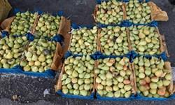 خیز ازبکستان برای صادرات 5 میلیارد دلاری میوه و سبزیجات