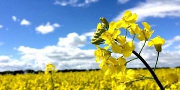 آغاز کشت دوم محصولات کشاورزی در ۱۲۰ هزار هکتار از اراضی گیلان