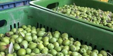 ارائه تسهیلات برای ایجاد واحد فرآوری محصولات کشاورزی در طارم