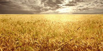 بیمیلی برخی  کشاورزان کهگیلویه نسبت به بیمه محصولات زراعی