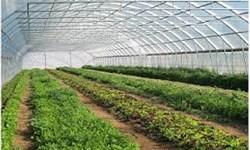 بروکراسیهای زائد اداری، کشاورزان گلستانی را از ایجاد گلخانه منصرف کرد