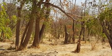 پارک جنگلی چیتگر بسته نیست