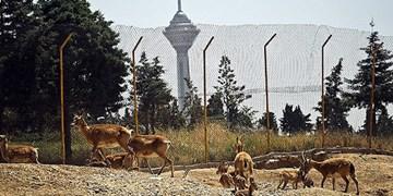 انتقال بی سر و صدای حیوانات کلینیک پارک پردیسان