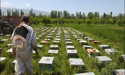 آغاز سرشماری از زنبورستانهای فارس
