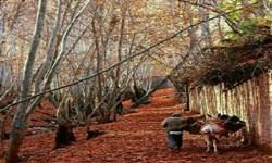 یک مقصد سفر زیبای پاییزی در جوار شیراز/ روستای «قلات» گزینه مناسب سفر پاییزی