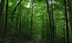 اجرای طرح کمربند حفاظتی منابع طبیعی در نهاوند