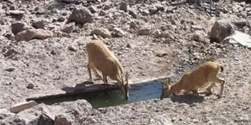 آب 25 آبشخور حیات وحش در مناطق حفاظت شده گچساران در حال تامین است