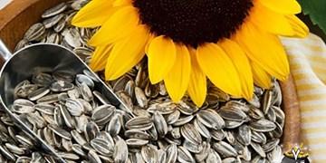 سایه واردات بر سر تنها بازار بورس محصولات دانههای آجیلی کشور