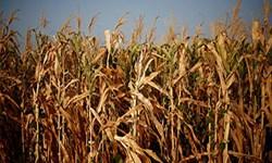 کشاورزان برای بیمه کردن محصولات زراعی خود تا ۱۵ آذرماه فرصت دارند