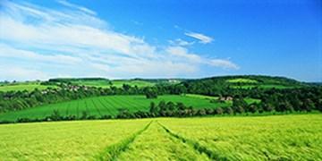 ضرورت کنترل پوره سن در مزارع آبی و مناطق کوهپایهای