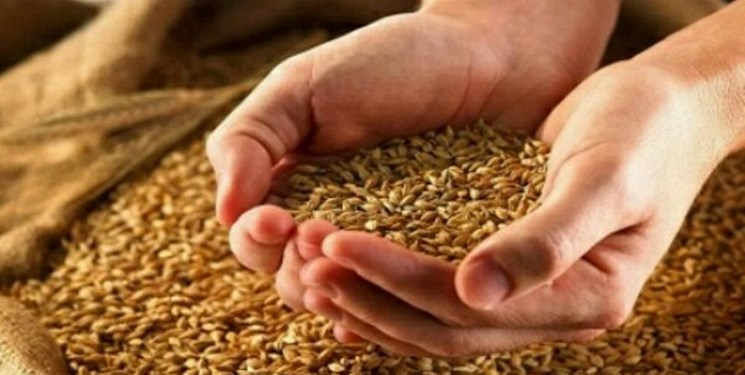 توزیع 1500 تن بذر گندم برای کشت پاییزه در مهاباد