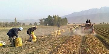 بی برنامگی مسؤولان، کشاورزان فریدنی را متحمل خسارت کرده است