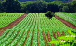 ۴۰ درصد زمینهای کشاورزی آذربایجان شرقی شور شدند/ کاشت 150 هزار اصله نهال برای زراعت چوب