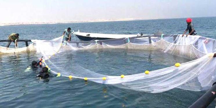 توافقنامه فائو و  شیلات ایران برای حمایت از توسعه پرورش ماهی در قفس