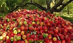 تولید سالانه ۳۵ هزار تن سیب درختی در لردگان