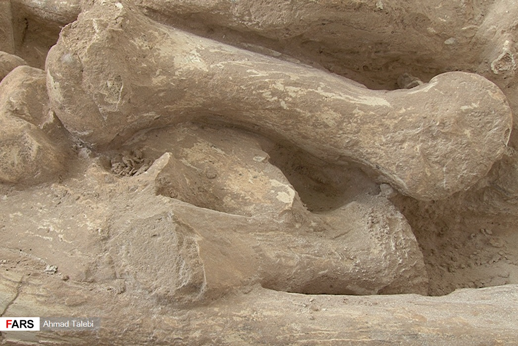Paleontology دیرینه شناسی