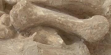 نخستین انسانها صدهزار سال قبل از راه رسیدند