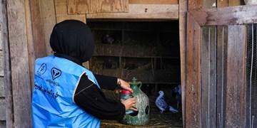 واکسیناسیون 270 هزار طیور در زنجان