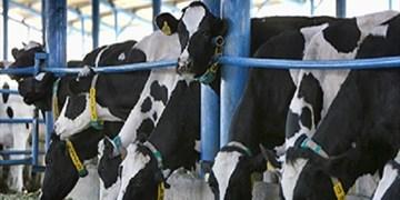 عرضه 2 میلیون تن شیر در زمستان 98
