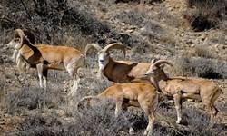 ممنوعیت ورود به پارکهای ملی بمو، قطرویه و بختگان تا نیمه خرداد