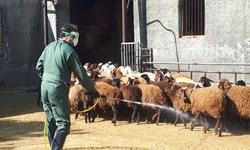 رزمایش پدافند زیستی با محوریت مقابله با بیماری تب کریمه کنگو در اسلامشهر برگزار شد