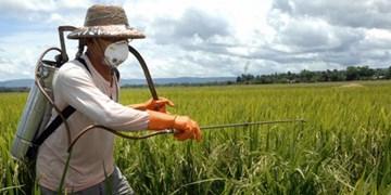 کشاورزان کرمانشاهی مزارع گندم خود را سمپاشی کنند