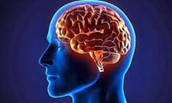 رژیم غذایی که مغز را جوان نگه میدارد