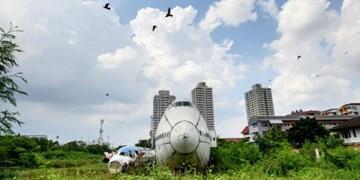 عدم کاهش آلودگی صوتی موجب انقراض حیات وحش میشود