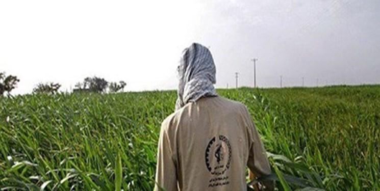 اجرا طرح بسیج همگام با کشاورز در 30 هزار روستا
