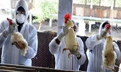 آخرین وضعیت  آنفلوانزا حاد پرندگان در آذربایجانشرقی