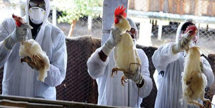 شیوع آنفلوآنزای H5N6 در چین / زنگ هشدار برای ایران به صدا درآمد