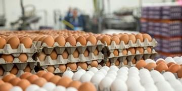 کشف بیش از ۳ تن تخم مرغ بدون مجوز در بجنورد
