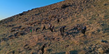 آغاز اجرای طرح نهضت «نهالکاری همگانی برای ایرانی سرسبز»  در کردستان