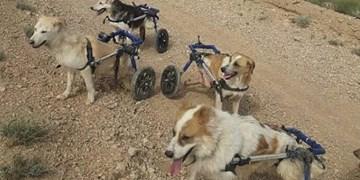 زندگی زوج جوان شاهرودی؛ وقف نجات حیوانات