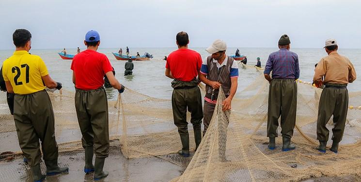 صید ۱۲۰ تن ماهی کیلکا در استان گیلان