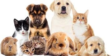 حیوانات خانگی؛ از اصلاح 260 هزار تومانی تا خانه 12 میلیونی