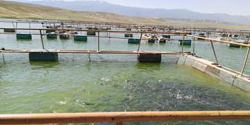 توسعه پرورش ماهی درقفس در5 سد آذربایجانشرقی/تولید 130تن ماهی قزل آلا
