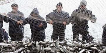 کاهش صید انواع آبزیان در آذربایجان غربی/ صید «شاه میگو» تقریبا به صفر رسید