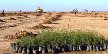 150 هکتار از اراضی «حلقه دره» کرج جنگل کاری میشود