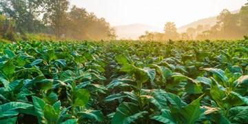 گیاهانی که در برابر سرما مقاومت میکنند