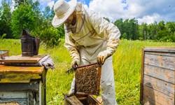برند مغفول مانده عسل لرستان در سایه جولان دلالان