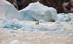 گرمایش جهانی برف آلاسکا را ذوب میکند